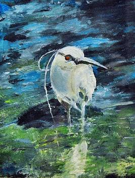 Black Crowned Night Heron by Mary Chalmers Main
