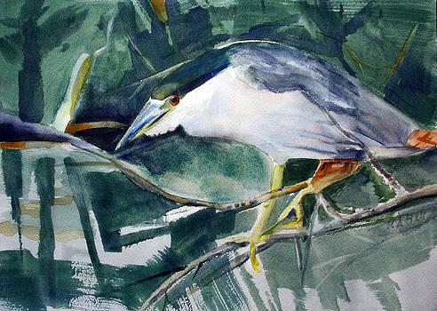 Black-crowned Night Heron by Randy Bell