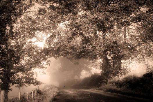 Jenny Rainbow - Black Dog on a Misty Road. Misty Roads of Scotland