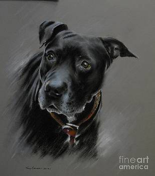 Black Dog by Tony Calleja