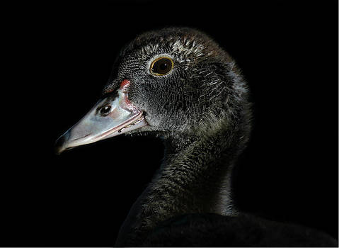 Erin Tucker - Black Duck