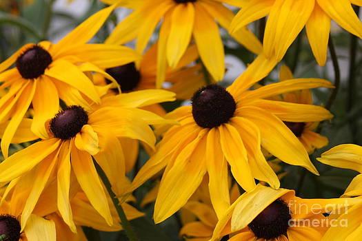 Black Eye Susan Flower by Spirit Baker
