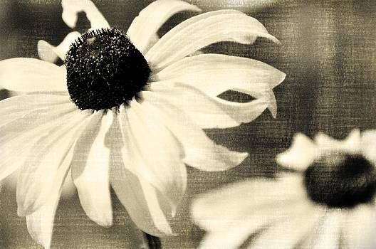 Marty Koch - Black Eyed Susan BW