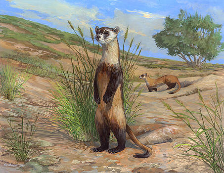Black-footed Ferret by ACE Coinage painting by Michael Rothman