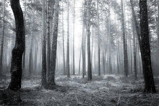 Black forest  by Svetoslav Sokolov