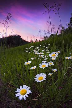 Black Hills Botanicals by Evan Ludes