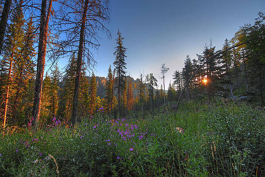 Black Hills Meadow by Chris Allington