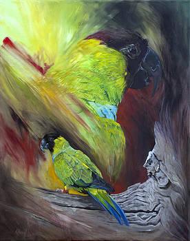 Black-hooded Parakeet by Kitty Harvill
