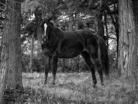 Black Horse by Joyce  Wasser
