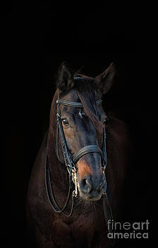Black Horse on Black by Heather Swan