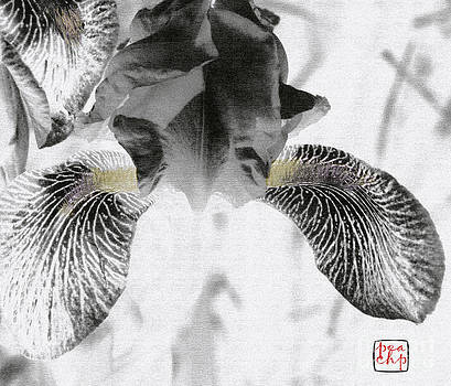 Black Iris by Peach Pair