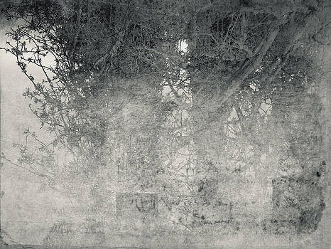 Black juniper by Vladas Orzekauskas