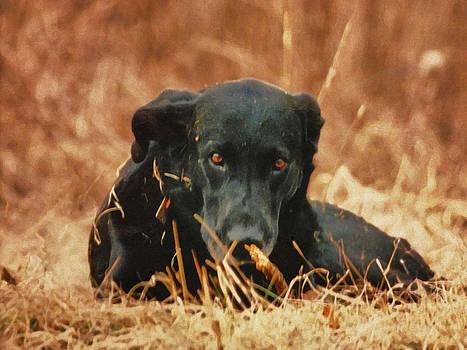Linda Sannuti - Black Labrador