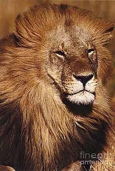 Diane Kurtz - Black Maned Lion Portrait