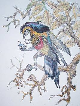 Black Maned Spybird by Sheila Tibbs