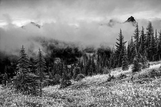 Randall Branham - Black n White View From Mt Rainier