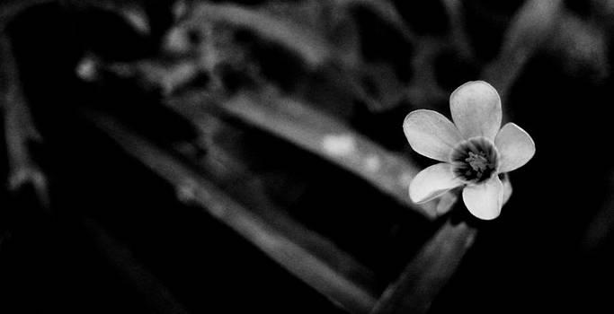 Black nature by Victor Daniel  Rosas Flores