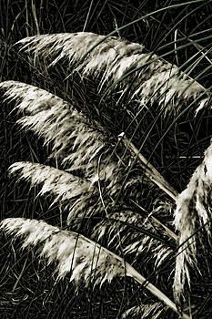 Joe Bledsoe - Black Pampas