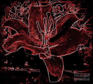 Black Red Lilly by Susan Saver