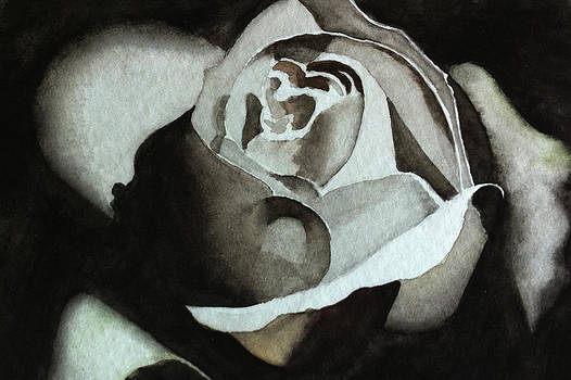 Black Rose by Ria Sharon