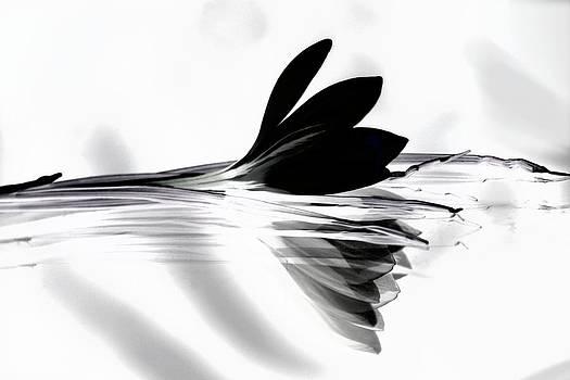 Black Silk Crocus by Andrea Lazar