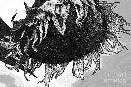 Black Sunflower  by Juls Adams