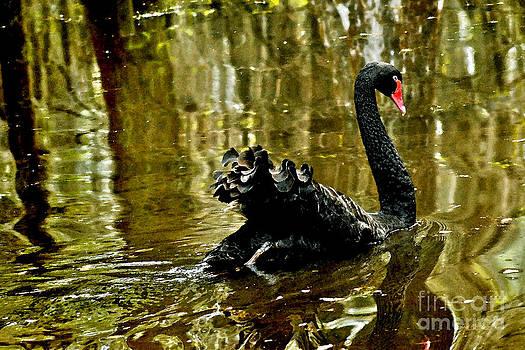 Jeff McJunkin - Black Swan Lake