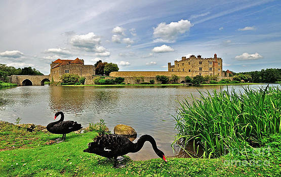 Black Swans at Leeds Castle by Bel Menpes