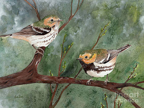 Black Throated Green Warbler by Nicole Werth