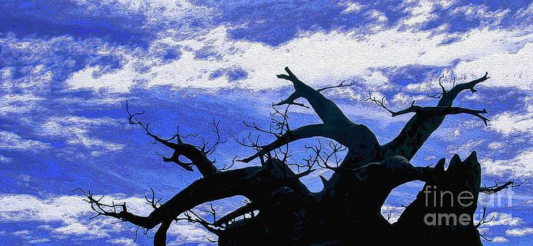 Black Tree by Jerry Hart