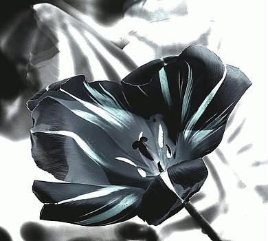 Black Tulip II by Andrea Lazar