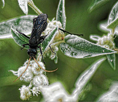 Joe Bledsoe - Black Wasp