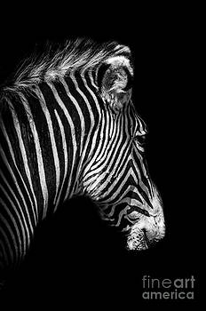 Darren Wilkes - Black With White Stripes