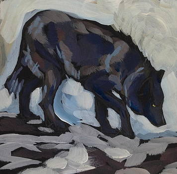Black Wolf Searching by Kat Corrigan