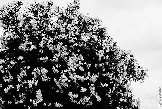 Blackandwhite by Ivan Vasquez