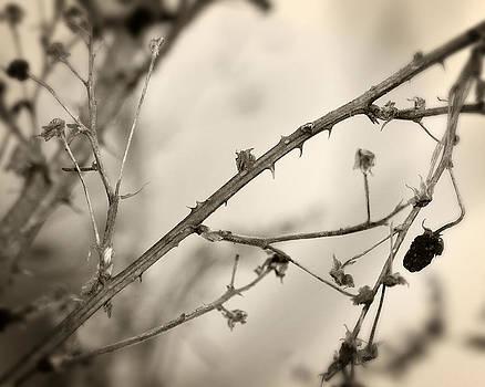 Scott Hovind - Blackberry Thorns 2