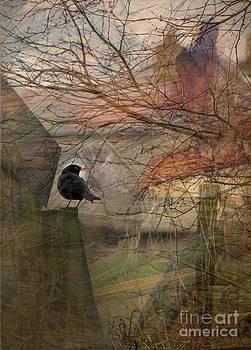 Liz  Alderdice - Blackbird