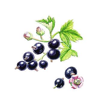 Irina Sztukowski - Blackcurrant Botanical Design