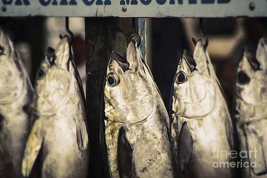 Blackfin Tuna Market by Marshall Bishop