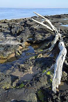 Blackrock Beach Driftwood Florida by Bruce Gourley
