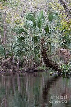 Paul Rebmann - Blackwater Creek Palm