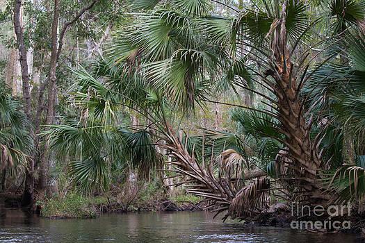 Paul Rebmann - Blackwater Creek Palms