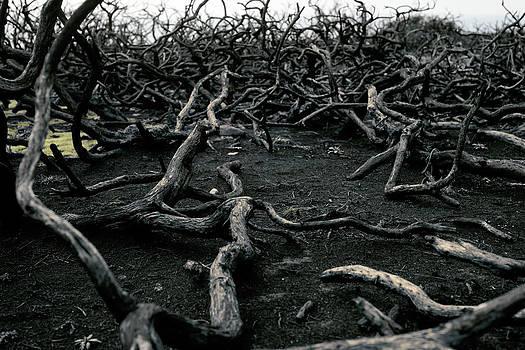 Blackwood by Anthony Bean