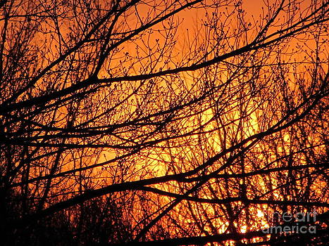 Susan Carella - Blaze Of Glory - Winter Sunset