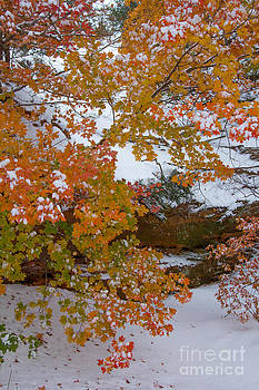 Blazing Colors by Jim McCain