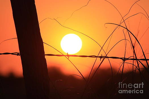 Blazing Orange Fence Line Sunset by Robert D  Brozek