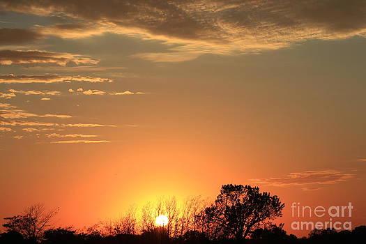 Blazing Orange Sky by Robert D  Brozek