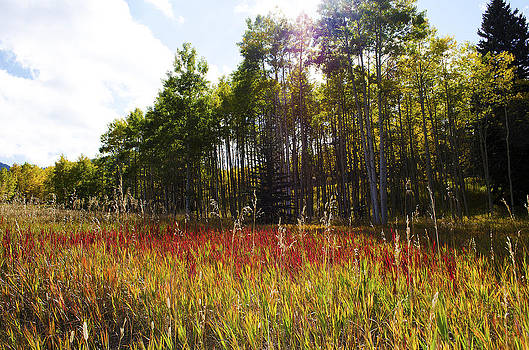 Blazing Red Grass in Colorado by Heather Grow