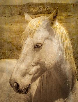 Bleach Blond by Lou  Novick