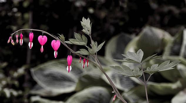Bleeding Hearts by Greg Reed